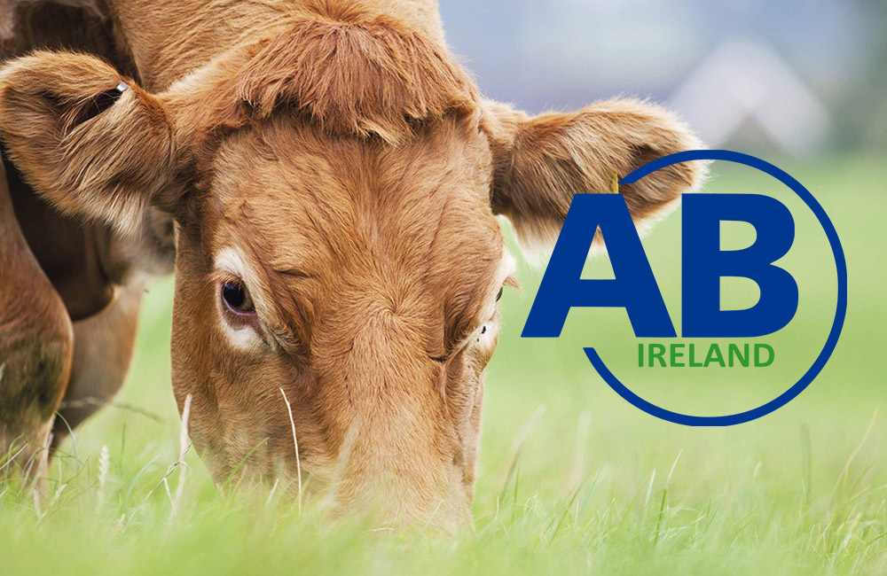 Irish cattle breeders offered the opportunity to utilise in-vitro production (IVP) on commercial scale